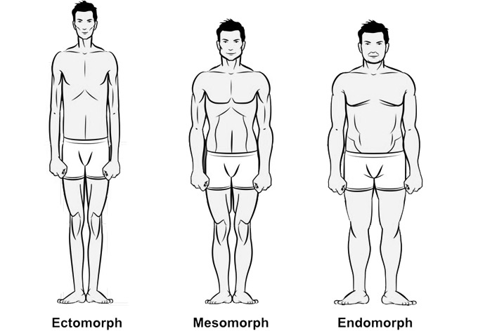 A picture of three Bodytypes by Granito Diaz, showing representations of Mesomorphy, Endomorphy and Ectomorphy