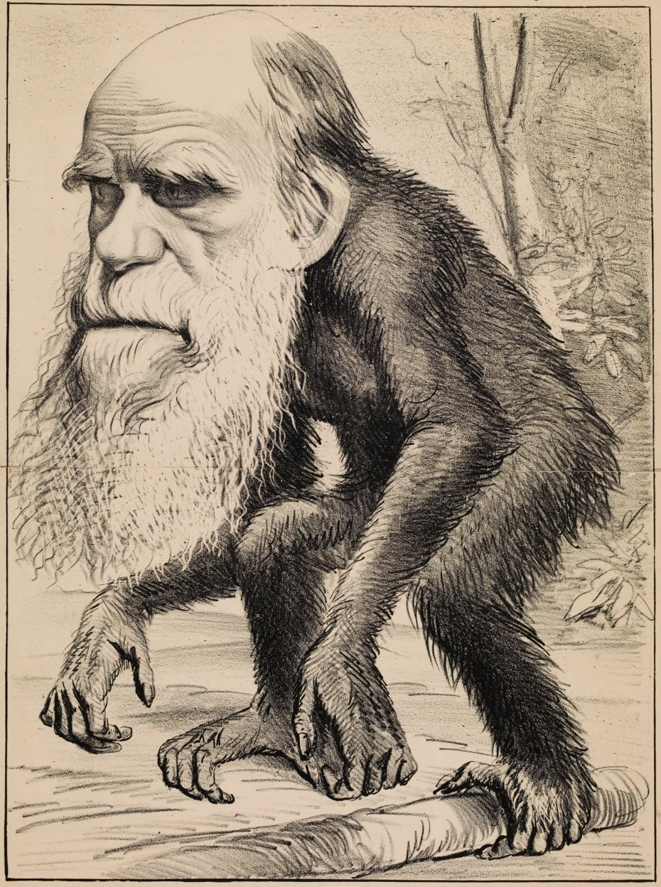 Famous 'The Hornet' caricature of 1871 depicting Darwin as a man / ape