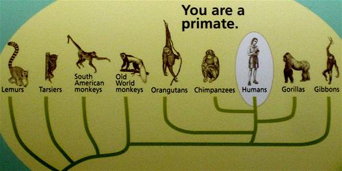 human evolutionary theory Fiche de révision Un regard sur lévolution de lHomme