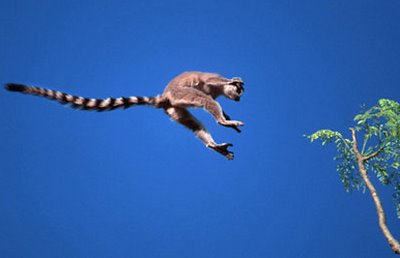 external image jumping_lemur.jpg