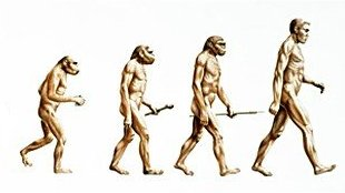 [darwinius masillae discovery and human evolution]